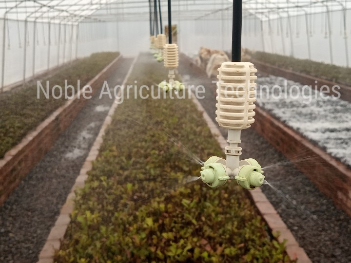 Irrigation System in a Noble Greenhouse