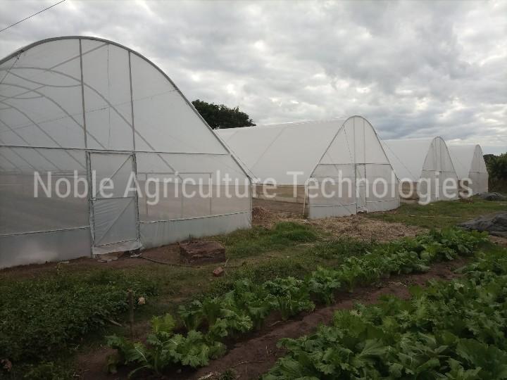 Newly Maintained Greenhouse at Tithokoze Farm